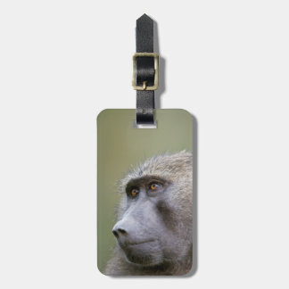 Portrait of adult Olive baboon (Papio anubis) Bag Tag