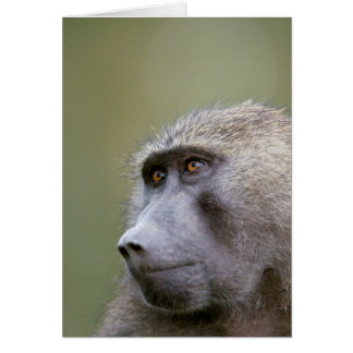Portrait of adult Olive baboon (Papio anubis) Card