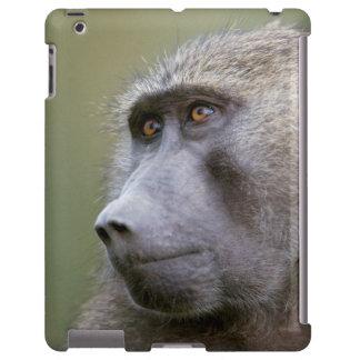 Portrait of adult Olive baboon (Papio anubis)