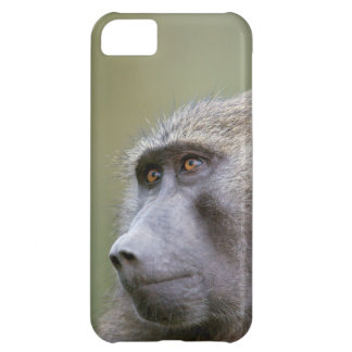Portrait of adult Olive baboon (Papio anubis) Cover For iPhone 5C
