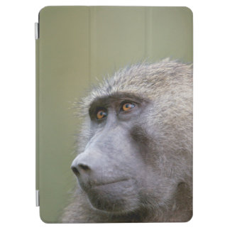 Portrait of adult Olive baboon (Papio anubis) iPad Air Cover