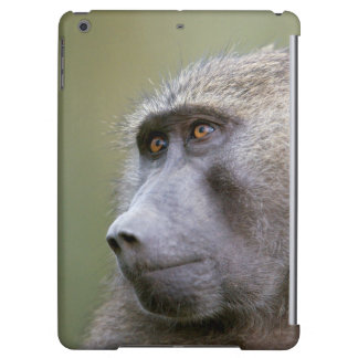 Portrait of adult Olive baboon (Papio anubis) Case For iPad Air