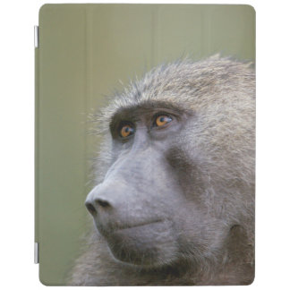 Portrait of adult Olive baboon (Papio anubis) iPad Smart Cover