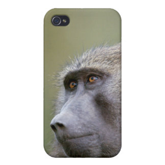 Portrait of adult Olive baboon (Papio anubis) iPhone 4/4S Covers