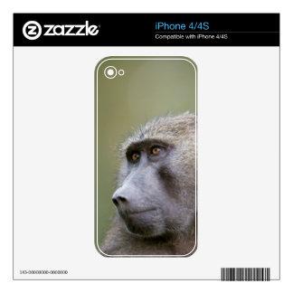 Portrait of adult Olive baboon (Papio anubis) iPhone 4S Decals