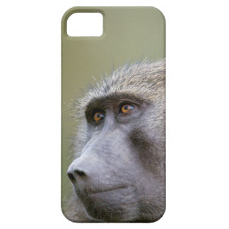 Portrait of adult Olive baboon (Papio anubis) iPhone SE/5/5s Case