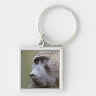 Portrait of adult Olive baboon (Papio anubis) Keychain
