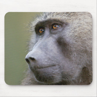 Portrait of adult Olive baboon (Papio anubis) Mouse Pad