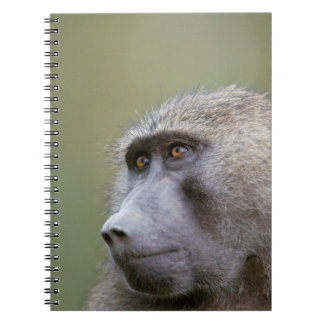 Portrait of adult Olive baboon (Papio anubis) Notebook