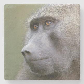 Portrait of adult Olive baboon (Papio anubis) Stone Coaster