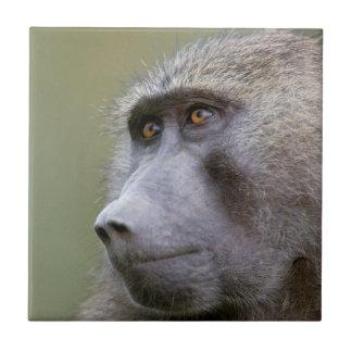 Portrait of adult Olive baboon (Papio anubis) Tile