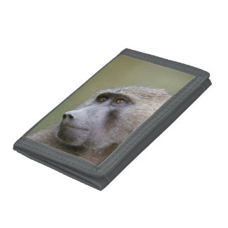 Portrait of adult Olive baboon (Papio anubis) Trifold Wallet