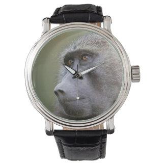Portrait of adult Olive baboon (Papio anubis) Wrist Watch