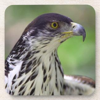 Portrait Of African Hawk Eagle Beverage Coaster