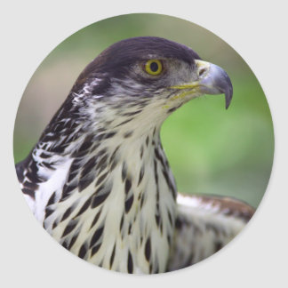 Portrait Of African Hawk Eagle Classic Round Sticker