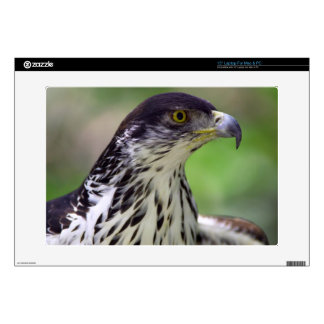 Portrait Of African Hawk Eagle Decals For Laptops