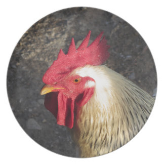 Portrait of an adult rooster on the poultry yard plate
