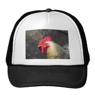 Portrait of an adult rooster on the poultry yard trucker hat
