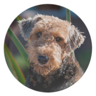 Portrait of an Airedale Terrier 1 Dinner Plate