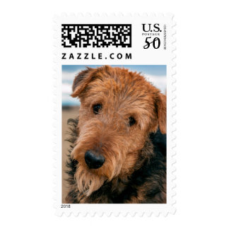 Portrait of an Airedale Terrier 2 Postage