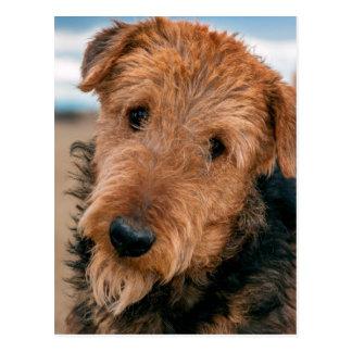 Portrait of an Airedale Terrier 2 Postcard