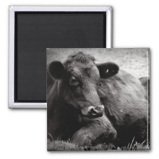 Portrait of an Angus 2 Inch Square Magnet