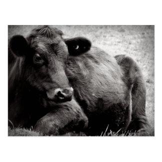 Portrait of an Angus Postcard