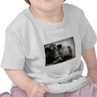 Portrait of an Angus Tee Shirts