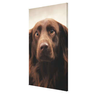 Portrait of an apprehensive young female canvas print