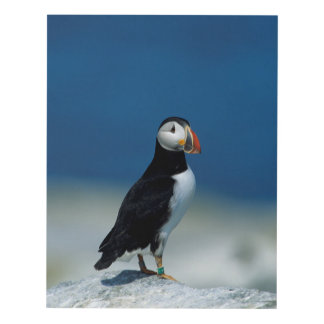 Portrait of an Atlantic Puffin Panel Wall Art