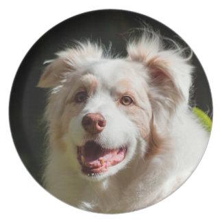 Portrait of an Australian Shepherd Melamine Plate