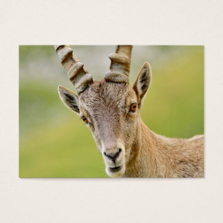 Portrait of an ibex business card