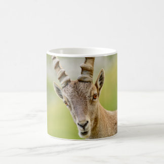 Portrait of an ibex coffee mug