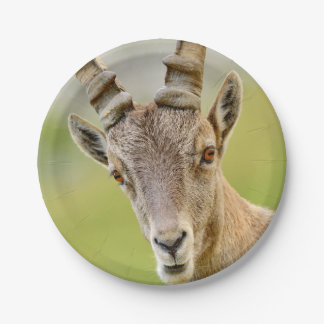 Portrait of an ibex paper plate