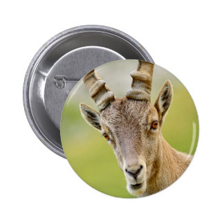 Portrait of an ibex pinback button