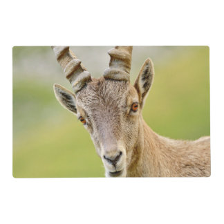 Portrait of an ibex placemat