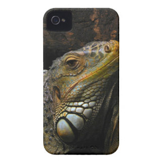 Portrait of an Iguana iPhone 4 Case-Mate Cases