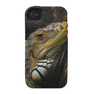 Portrait of an Iguana iPhone 4/4S Cases