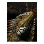 Portrait of an Iguana Post Cards