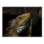 Portrait of an Iguana Postcard