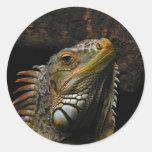 Portrait of an Iguana Round Stickers
