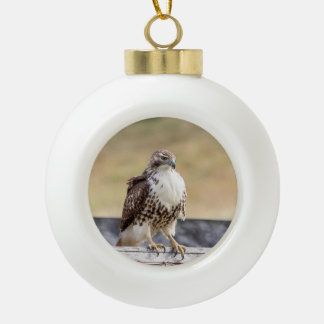 Portrait of an Immature Red Tailed Hawk Ceramic Ball Christmas Ornament