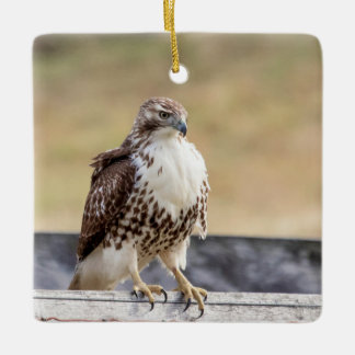 Portrait of an Immature Red Tailed Hawk Ceramic Ornament