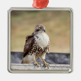 Portrait of an Immature Red Tailed Hawk Metal Ornament