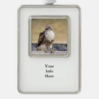Portrait of an Immature Red Tailed Hawk Ornament