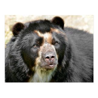 Portrait of Andean bear Postcard