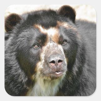 Portrait of Andean bear Square Sticker