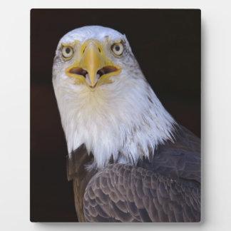 Portrait of bald eagle photo plaque