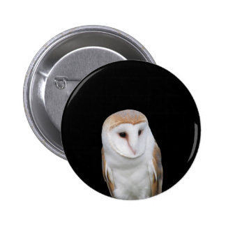 Portrait of barn owl isolated on dark background pinback button