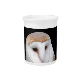 Portrait of barn owl isolated on dark background pitcher